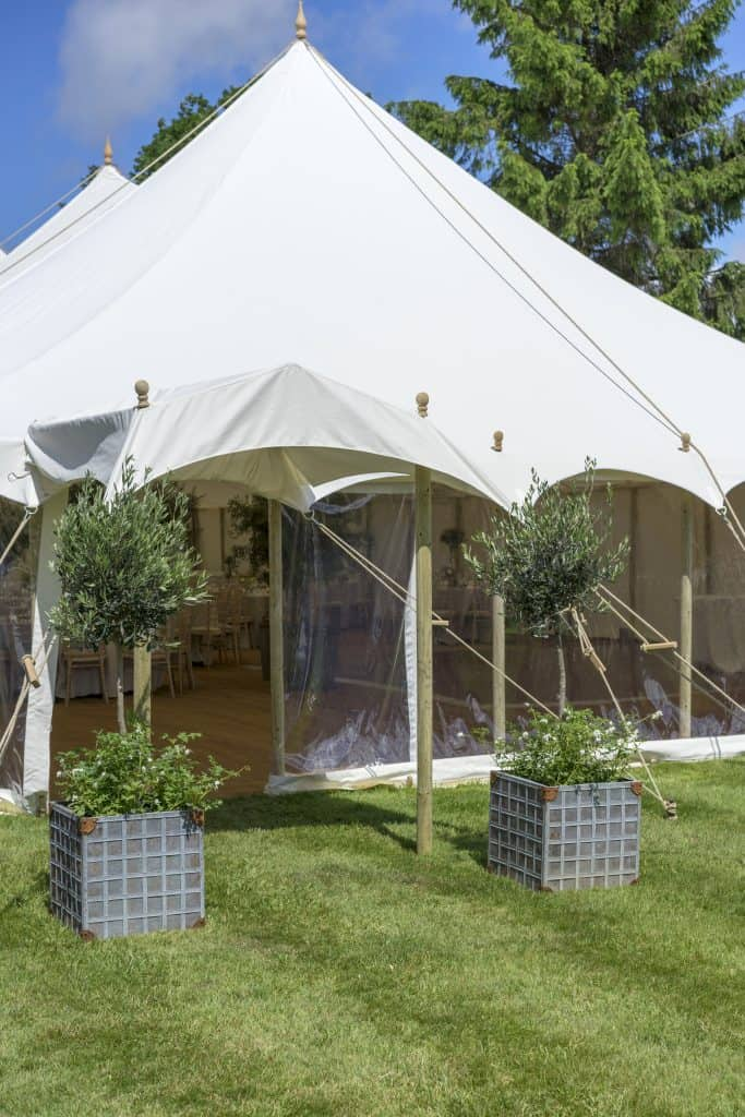 Olive trees at marquee entrance